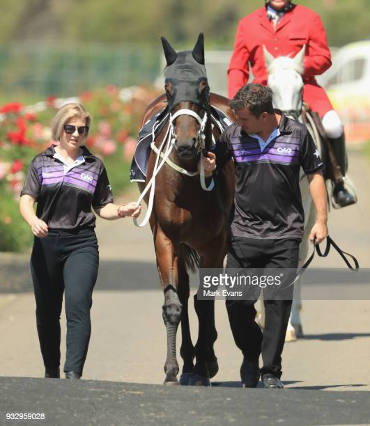 Winx arrives in the mounting yard for a gallop during Sydney Racing at Rosehill Gardens on March 17 2018 in Sydney Australia