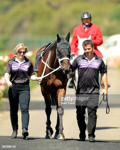 Winx arrives in the mounting yard for an exhibition gallop during Sydney Racing at Rosehill Gardens on March 17 2018 in Sydney Australia