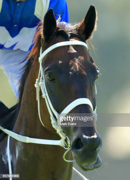 Winx in a gallop during Sydney Racing at Rosehill Gardens on March 17 2018 in Sydney Australia