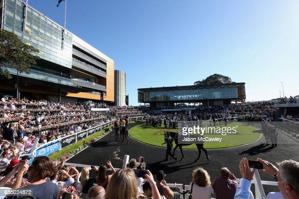 Winx is paraded in the Theatre of the Horse prior to the Apollo Stakes at Royal Randwick Racecourse on February 13 2017 in Sydney Australia
