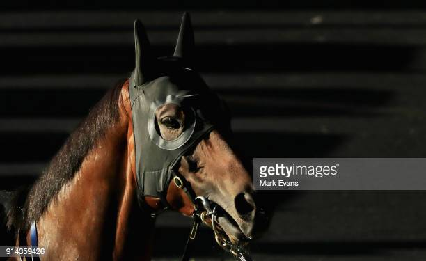Winx looks on before competing in a barrier trial at Rosehill Gardens on February 5 2018 in Sydney Australia