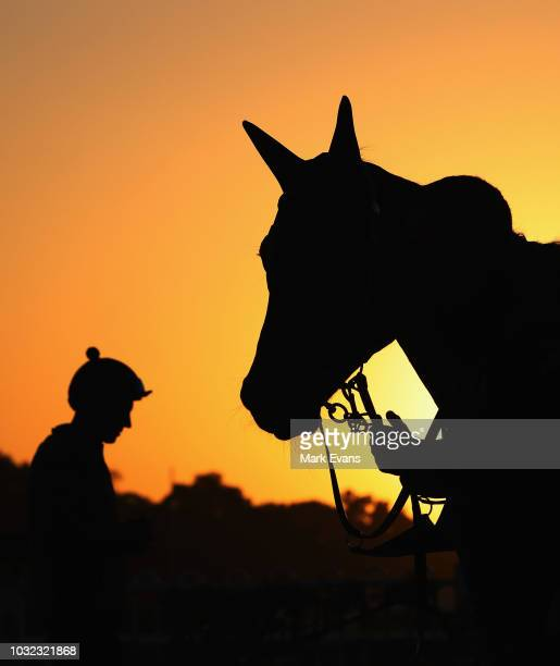 Winx looks towards jockey Hugh Bowman after a trackwork session at Rosehill Gardens on September 13 2018 in Sydney Australia