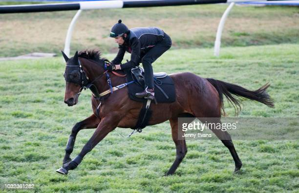 Winx ridden by Hugh Bowman gallops during a trackwork session at Rosehill Gardens on September 13 2018 in Sydney Australia