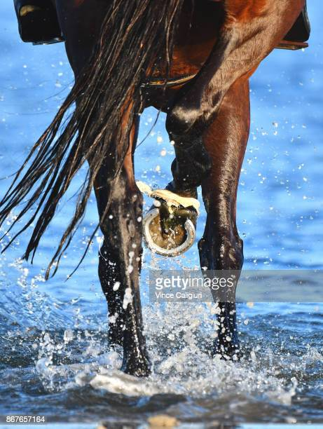 Winx walks through the shallow water at Altona Beach during a recovery session on October 29 2017 in Melbourne Australia Winx created history by...