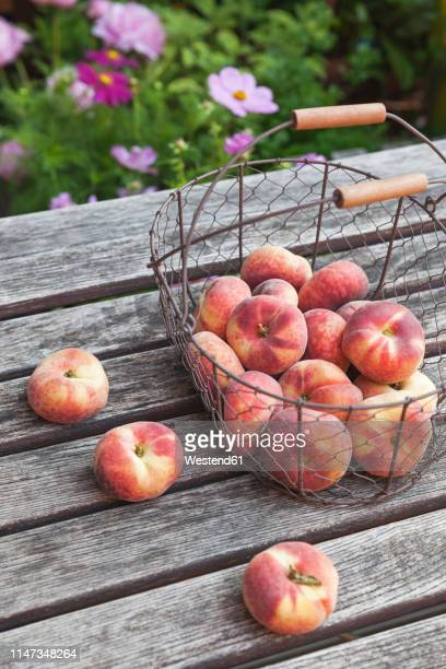 wire basket of doughnut peaches on garden table - peach flower stockfoto's en -beelden