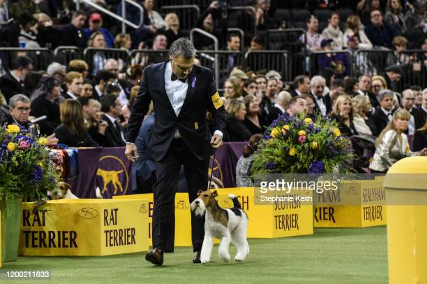 Wire fox terrier named Vinnie wins the Terrier Group during the annual Westminster Kennel Club dog show on February 11, 2020 in New York City. The...