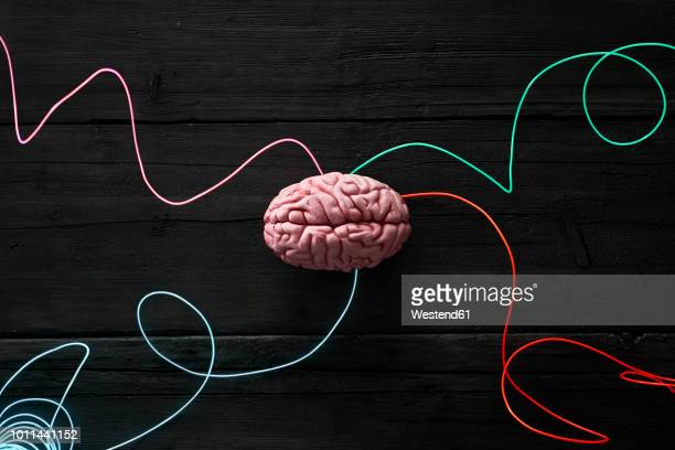 wired brain, symbol for deep learning - brain stock pictures, royalty-free photos & images