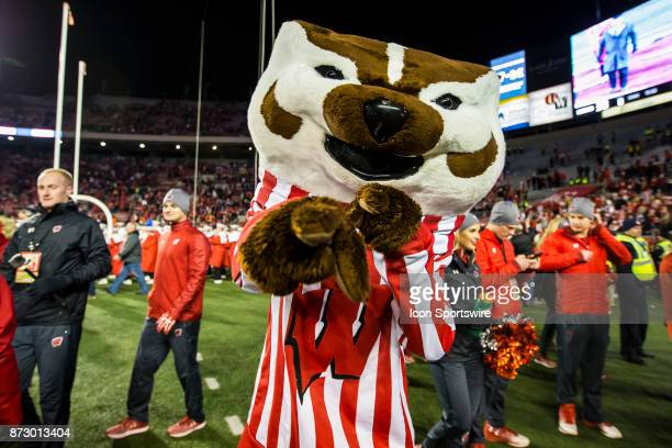 Wisconsin Badger mascot Bucky Badger poses for a photo after an college football game between the Iowa Hawkeyes and the Wisconsin Badgers on November...