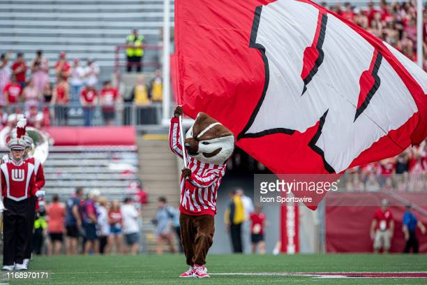 Wisconsin Badger mascot Bucky Badger waves the motion W flag at the 50 yard line durning pre game prior to a college football game between the...