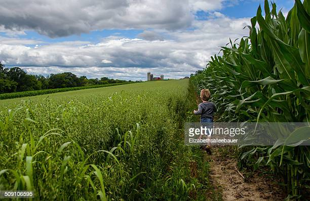 usa, wisconsin, boy ( 4-5 ) running through corn fields - staadts,_wisconsin stock pictures, royalty-free photos & images