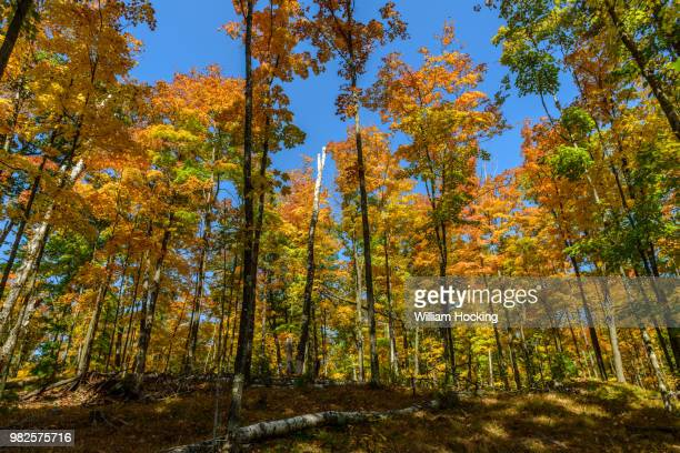 wisconsin fall - staadts,_wisconsin stock pictures, royalty-free photos & images