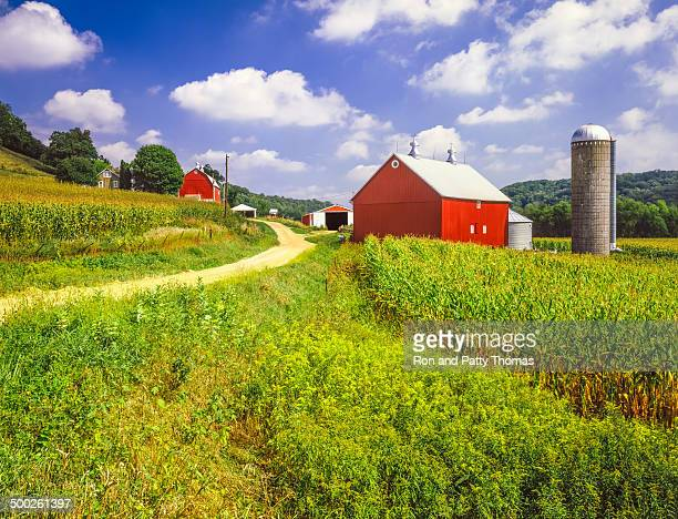 wisconsin farm and corn field - madison wisconsin stock pictures, royalty-free photos & images