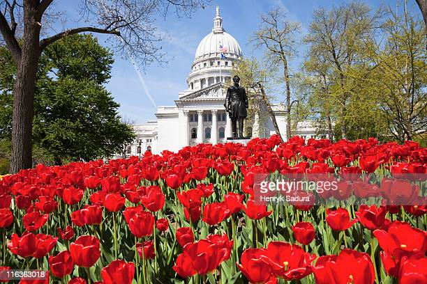 usa, wisconsin, madison, state capitol building, red tulips in foreground - madison wisconsin stock pictures, royalty-free photos & images