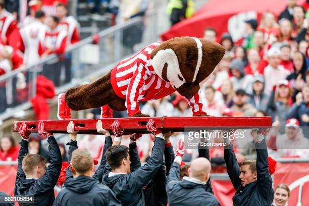 Wisconsin mascot Bucky Badger does pushups following a Wisconsin touchdown during a Big Ten football game between the University of Wisconsin Badgers...