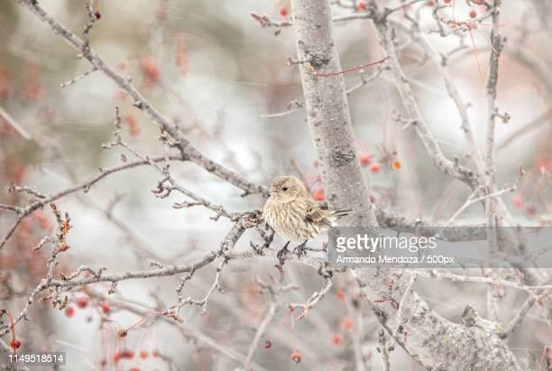 wisconsin weather: snow,snow and more snow - iowa_county,_wisconsin stock pictures, royalty-free photos & images