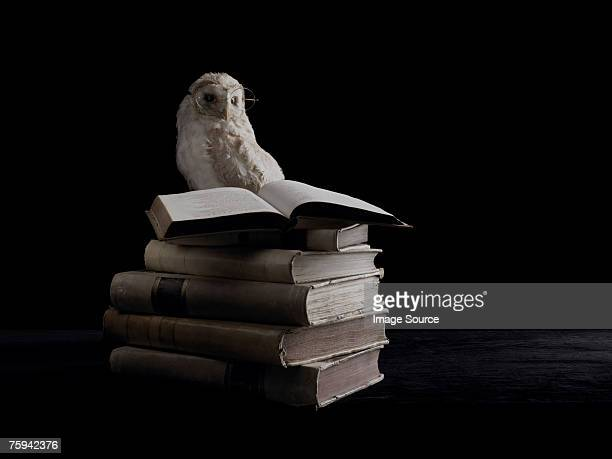 wise owl and books - wisdom stock pictures, royalty-free photos & images