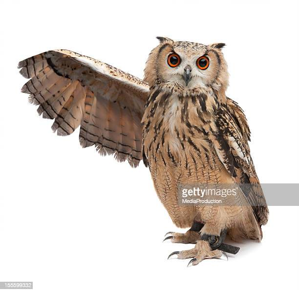 wise owl - animal stock pictures, royalty-free photos & images