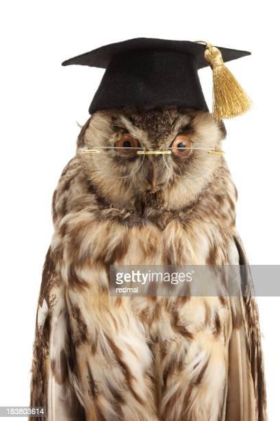 wise owl portrait