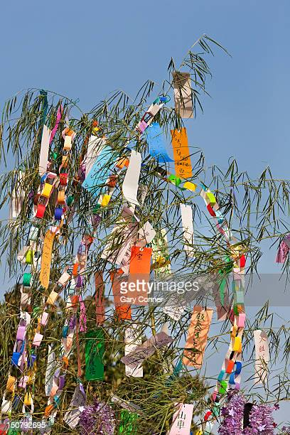 wishes written on paper placed in tree - tanabata festival stock pictures, royalty-free photos & images