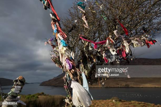 wishing tree in connemara, covered in ribbons - portafortuna foto e immagini stock