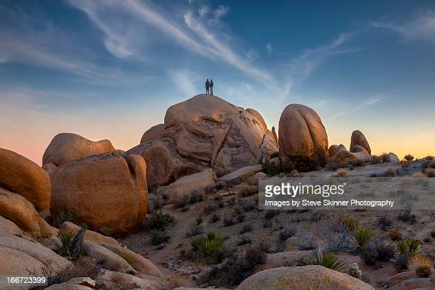 wispy - joshua tree - joshua tree stock photos and pictures