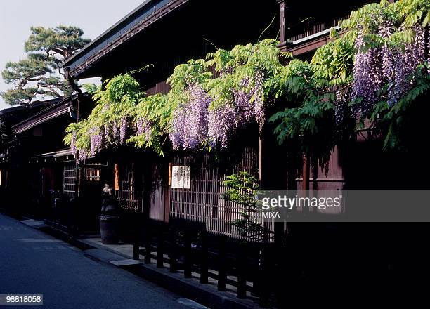 wisteria and japanese architecture, takayama, gifu, japan - takayama city stock pictures, royalty-free photos & images