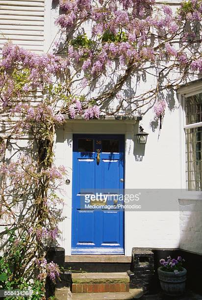 wisteria climbing on the wall of a house, rye, england - glycine photos et images de collection