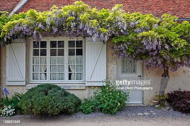 wisteria in full bloom surrounds the front of a house in saint-dye-sur-loire, france. this small village is found on the edge of the loire river. - glycine photos et images de collection