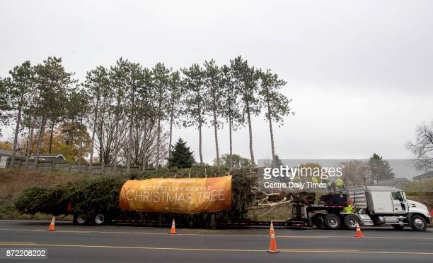 With a banner and a strand of holiday lights the 75foot Norway Spruce is ready to leave State College and head to Rockefeller Center on Thursday Nov...