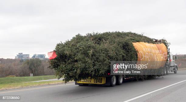With a banner and a strand of holiday lights the 75foot Norway Spruce off to Rockefeller Center on Thursday Nov 9 2017