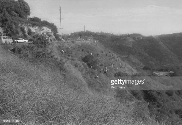With a court order prohibiting comment on the TateLaBianca murders police and explorer scouts comb a hillside off Mulholland Dr in the Hollywood...