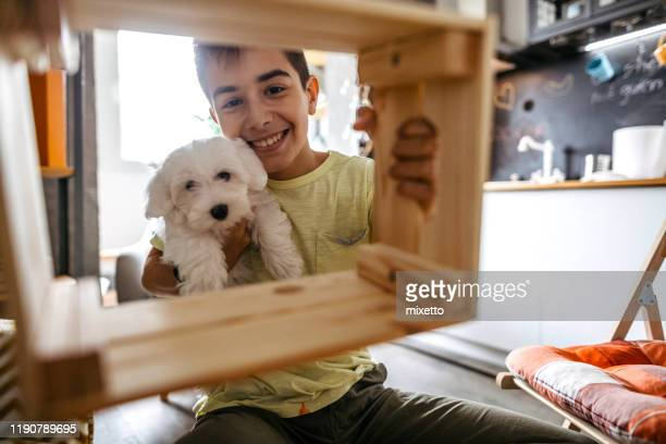 with company of his dog he can do a lot of stuffs - one animal stock pictures, royalty-free photos & images