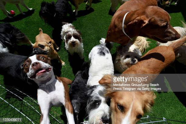 With dog parks all shuttered Wag Hotels has organized free Tuesday play dates for area dogs who need some play and romp time in Carson on Tuesday...