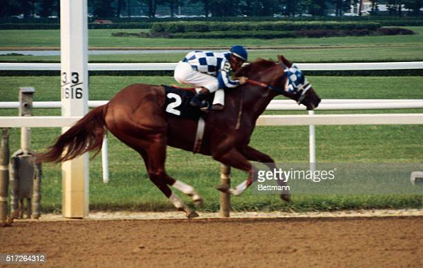 With his hooves off the ground Secretariat flies around the final turn of the Belmont Stakes leading the field by a wide margin The super horse...