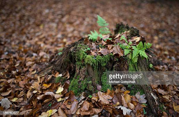 With moss overgrown tree trunk next to autumn leaves on October 29 2013 in Markt Beratzhausen Germany