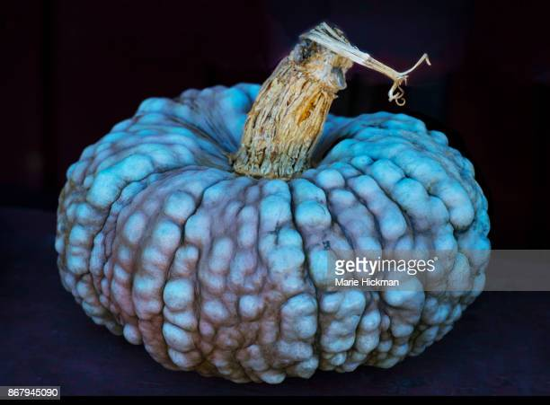 LUMPY BLUE PUMPKIN with Stem