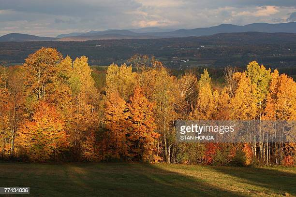 With the Green Mountains in the background, the rising sun illuminates a stand of trees as leaves show their fall colors, 20 October 2007, in this...