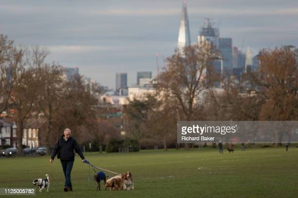 With the Shard and other City buildings in the background a pet dogs walker in Lambeth's Ruskin Park on 11th February 2019 in London England