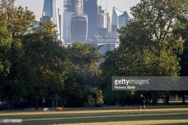 With the skyline of the capital's financial district the City of London in the distance man and his dogs walk in Ruskin Park on 10th August 2018 in...