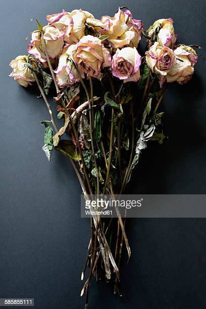 Withered bunch of roses on black ground