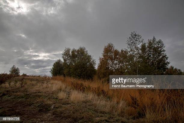 Withered grass in late autumn