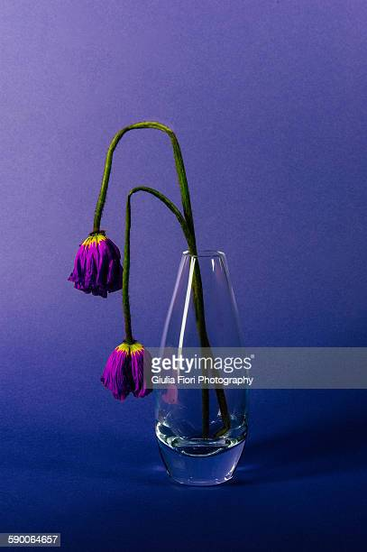 Withering flowers in a vase