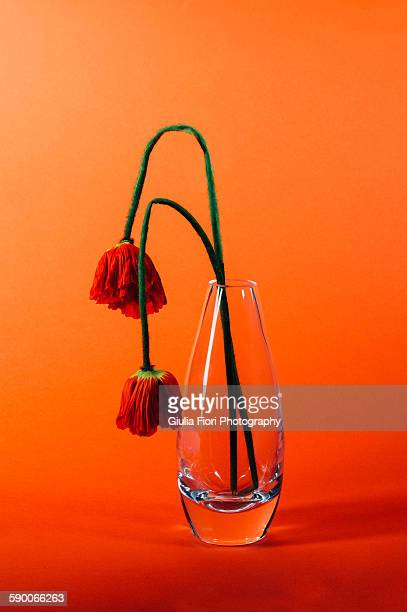 withering orange poppies - wilted plant stock pictures, royalty-free photos & images