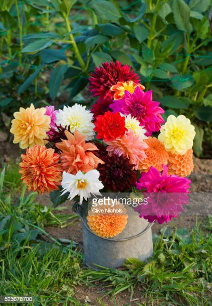 Withypitts Dahlias
