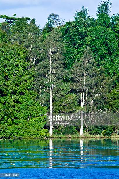 A dense thicket of trees grows along the shore of a picturesque lake.
