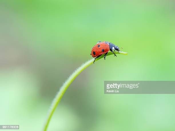 wj15072110.jpg - ladybird stock pictures, royalty-free photos & images