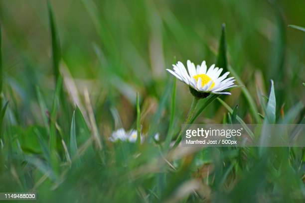 wo ist die sonne - sonne stock pictures, royalty-free photos & images