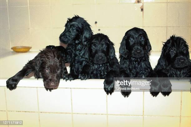 Wochen alt in der Badewanne / Überschrift Tiere
