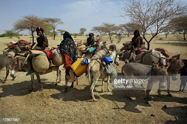 Wodaabe women and children on donkeys