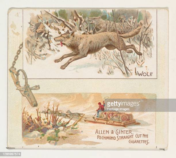 Wolf, from Quadrupeds series for Allen & Ginter Cigarettes, 1890. Artist Allen & Ginter.